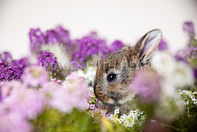 Baby Rabbit2 in Purple Flowers