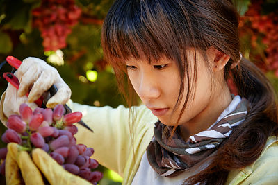 grape_picking