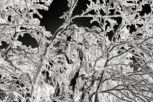 Mountain Peak Framed Through Rime Ice-Covered Trees