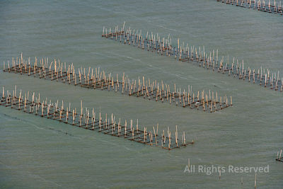 Aquaculture Fishing Industry Thailand