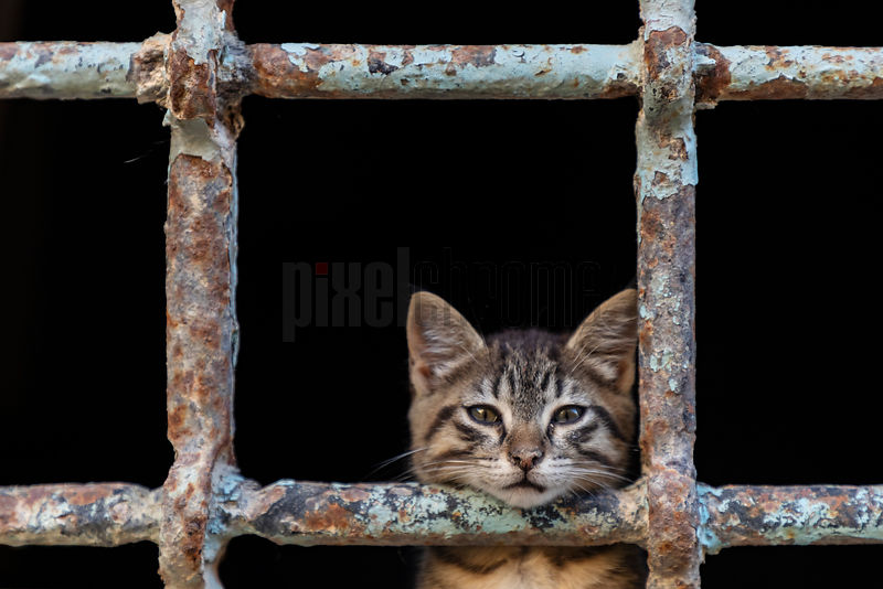 Portrait of a Stray Cat in an Abandoned Building