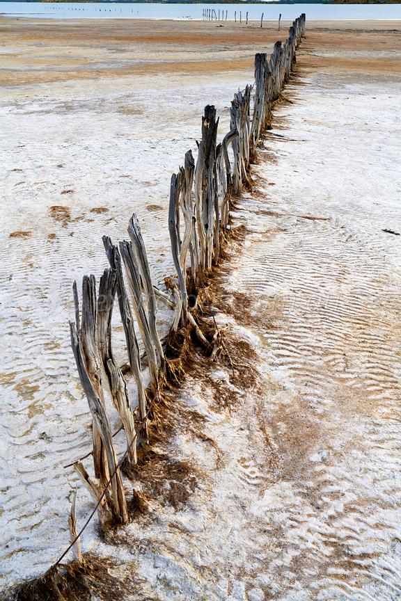 Old  fence, The Coorong, south eastern South Australia.