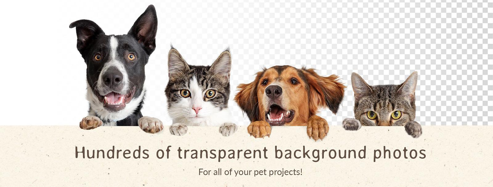 Transparent-Background-Pet-Photos