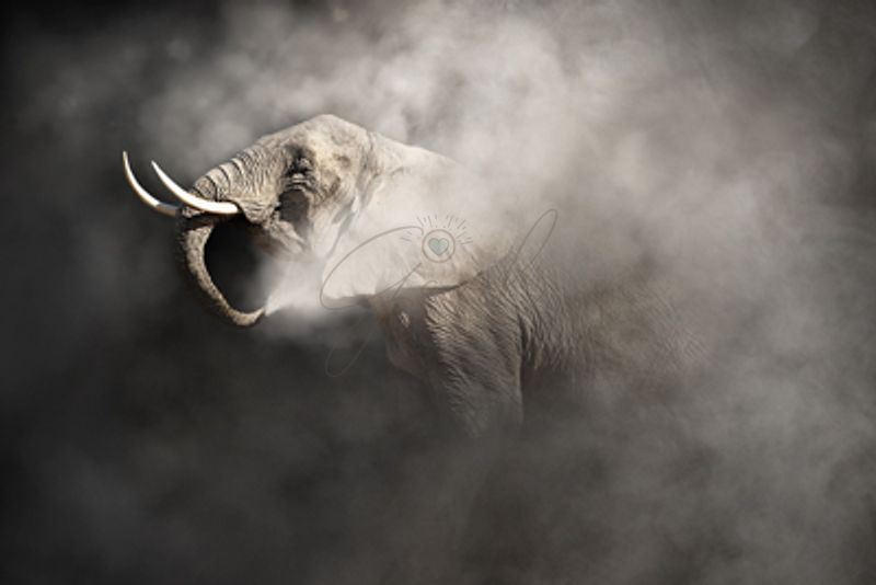 African_Elephant_In_The_Dust_1