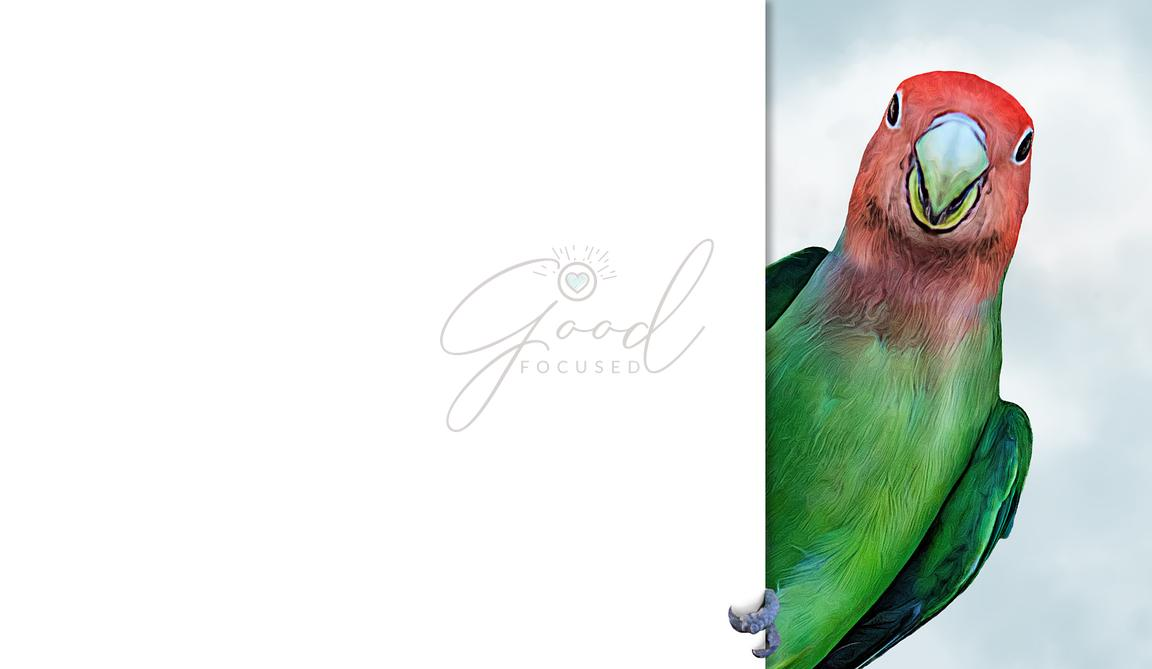 Tropical Lovebird Clinging to Blank White Sign