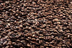 Roasted coffee beans with focal zone
